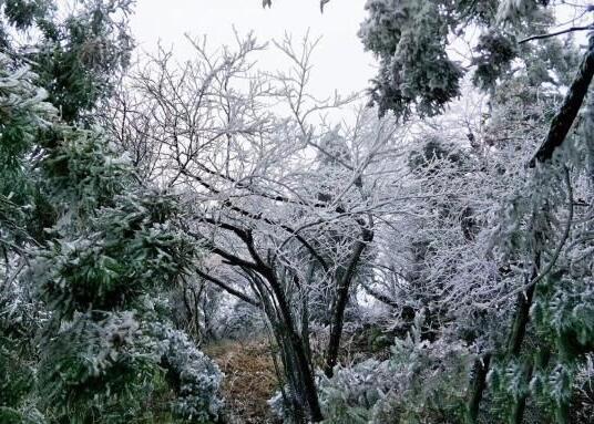 湖南南岳衡山景區迎今冬首場霧凇 美景宛如幻境