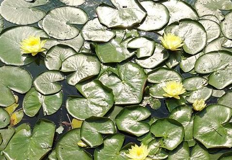 水清景美!烈士公園躍進湖水中浮島鮮花盛開
