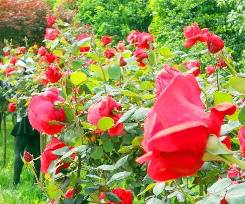 湖南省植物園邀市民免費遊園 時間就在這1天