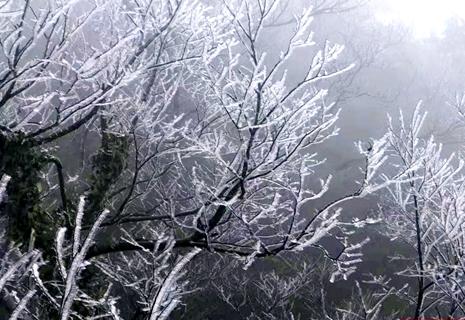 立冬,張家界天門山景區迎湖南首場霧凇(組圖)