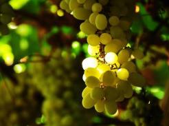 飛吐魯番 遊火焰山 吃葡萄……長沙直飛吐魯番航線開通!