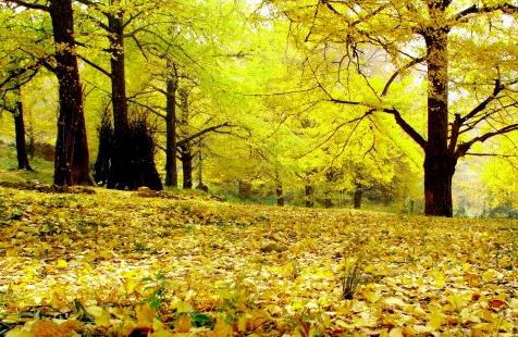 秋天即將上線!這5個地方藏著湖南最美秋色 千萬別錯過