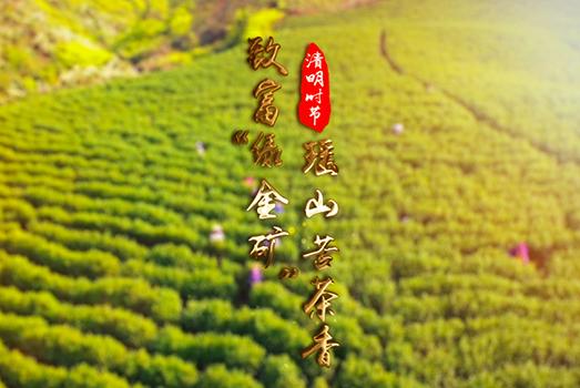 """致富""""綠金礦"""" 瑤山苦茶香"""