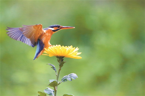 春光好 鳥兒歡